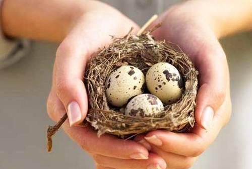 перепелиные яйца для волос